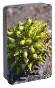 Seed Capsule Portable Battery Charger