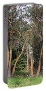 Seward Park Trees Portable Battery Charger