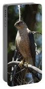 Sharp Shinned Hawk Portable Battery Charger
