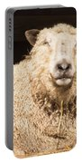 Sheep In Stable 2 Portable Battery Charger