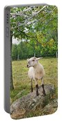 Happy Sheep Posing For Her Photo Portable Battery Charger