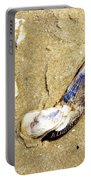 Shells On The Beach Of Jekyll Portable Battery Charger