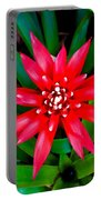 Sherman Gardens Study 9 Portable Battery Charger