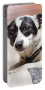 Shy Lonely Mini Fox Terrier Dog Laying On A Bed Portable Battery Charger