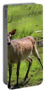 Sika Deer Water Hole Omagh Portable Battery Charger
