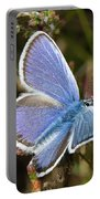 Silver-studded Blue Butterfly Portable Battery Charger