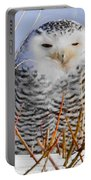 Sitting Snowy Owl Portable Battery Charger