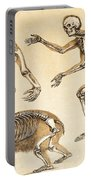 Skeletons Of Man, Ape, Bear, 1860 Portable Battery Charger
