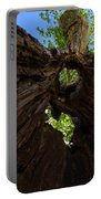 Sky View Through A Hollow Tree Trunk Portable Battery Charger