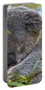 Sleeping Koala - Canberra - Australia Portable Battery Charger