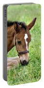 Sleepy Foal Portable Battery Charger