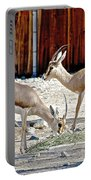 Slender-horned Gazelles In Living Desert Zoo And Gardens In Palm Desert-california Portable Battery Charger