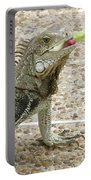 Snacking Iguana On A Concrete Walk Way Portable Battery Charger