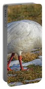 Snow Goose Feeding In A Field Portable Battery Charger