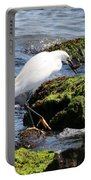 Snowy Egret  Series 2  2 Of 3  Preparing Portable Battery Charger