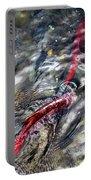 Sockeye Salmon, Alaska, August 2015 Portable Battery Charger