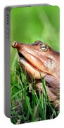 Soft Shell Turtle  Portable Battery Charger