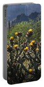 Sonoran Desert Cholla  Portable Battery Charger