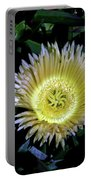 South African Flower 1 Portable Battery Charger