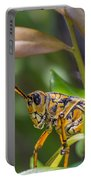 Southeastern Lubber Grasshopper Portable Battery Charger