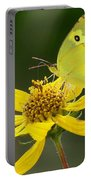 Southern Dogface Butterfly Portable Battery Charger