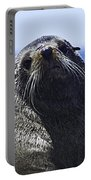 Southern Fur Seal Portable Battery Charger