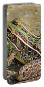 Southern Leopard Frog Portable Battery Charger