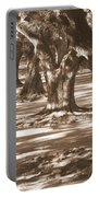 Southern Sunlight On Live Oaks Portable Battery Charger by Carol Groenen