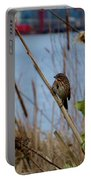 Sparrow On The Cattails Portable Battery Charger