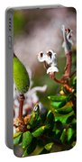 Spider Flower Seed Pod Portable Battery Charger