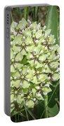 Spider Milkweed - Antelope Horns Portable Battery Charger