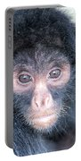 Spider Monkey Face Portable Battery Charger