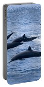 Spinner Dolphins Portable Battery Charger