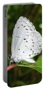 Spring Azure Butterfly Portable Battery Charger