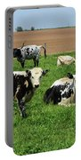 Spring Day With Cows On An Amish Cattle Farm Portable Battery Charger