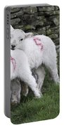 Spring Lambs 2 Portable Battery Charger