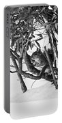 Squirrel In Low Branches Portable Battery Charger