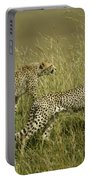 Stalking Cheetahs Portable Battery Charger