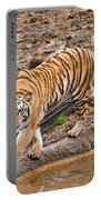 Stalking Tiger - Bengal Portable Battery Charger