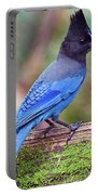 Steller's Jay IIi Portable Battery Charger