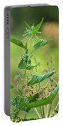Stinging Nettle Portable Battery Charger