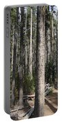 Storm Point Trail Forest Portable Battery Charger