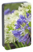 Striking Blue And White Agapanthus Flowers Portable Battery Charger
