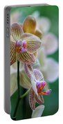 Striped Orchid 1 Portable Battery Charger