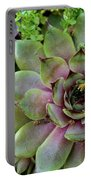 Succulent 3 Portable Battery Charger