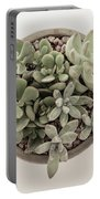 Succulent Plant From The Top Portable Battery Charger