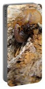 Sugarloaf Snail Portable Battery Charger