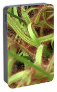 Sundew Portable Battery Charger