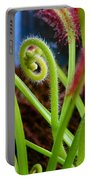 Sundew Drosera Capensis 3 Portable Battery Charger