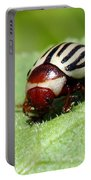Sunflower Beetle Portable Battery Charger